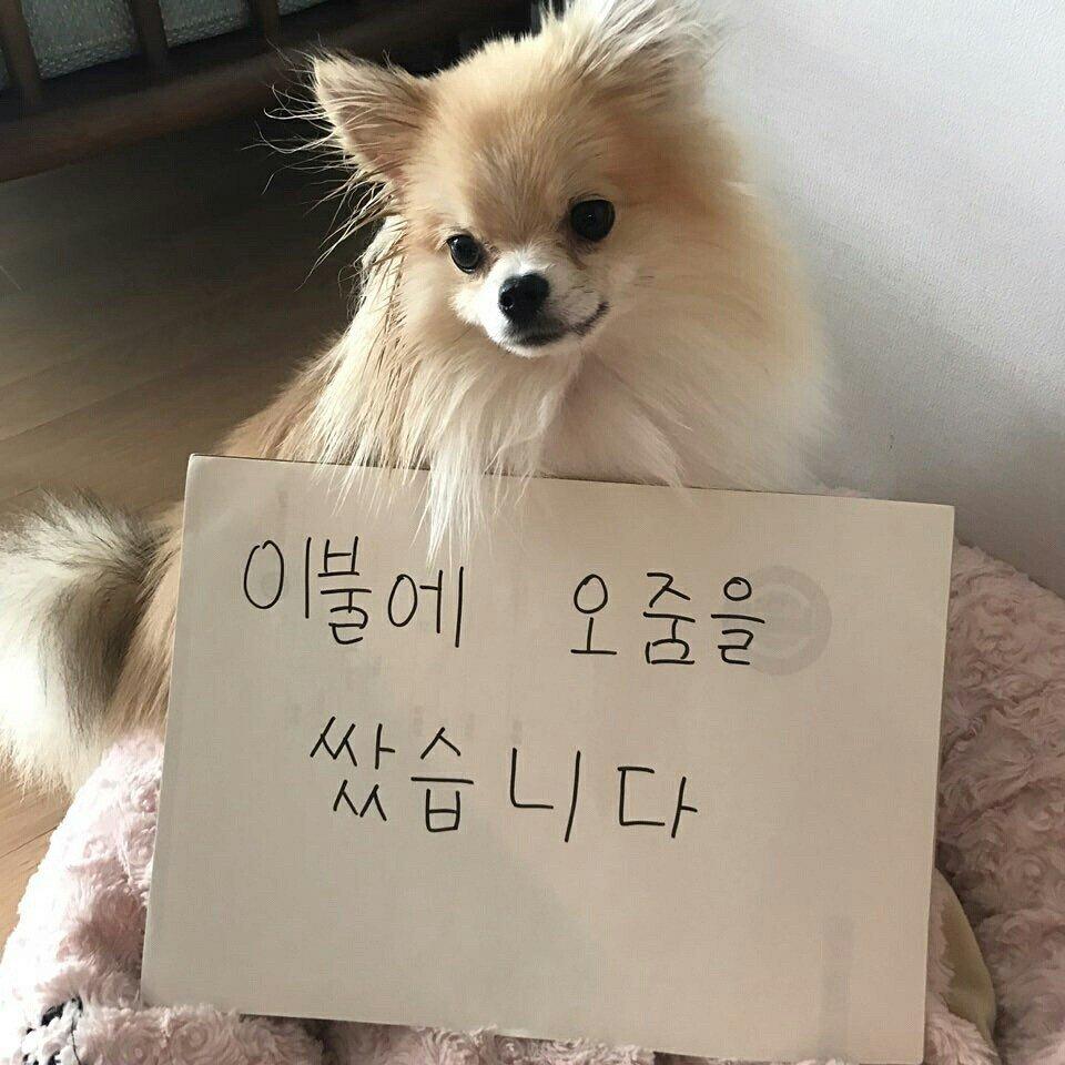 나연 반려견 쿠크의 성장과정 (4).jpg